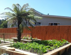 raised gardens and stained macrocarpa pailing